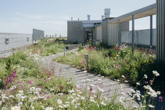 Rooftop meadow with a path in the middle.